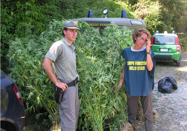 marijuana-forestale-latina-sabaudia-7644432