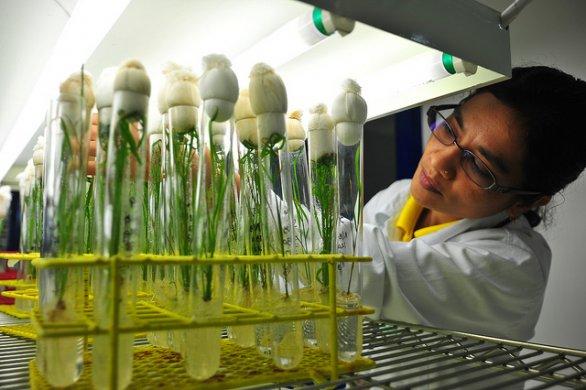 inquinamento-biotech-latina-487622343