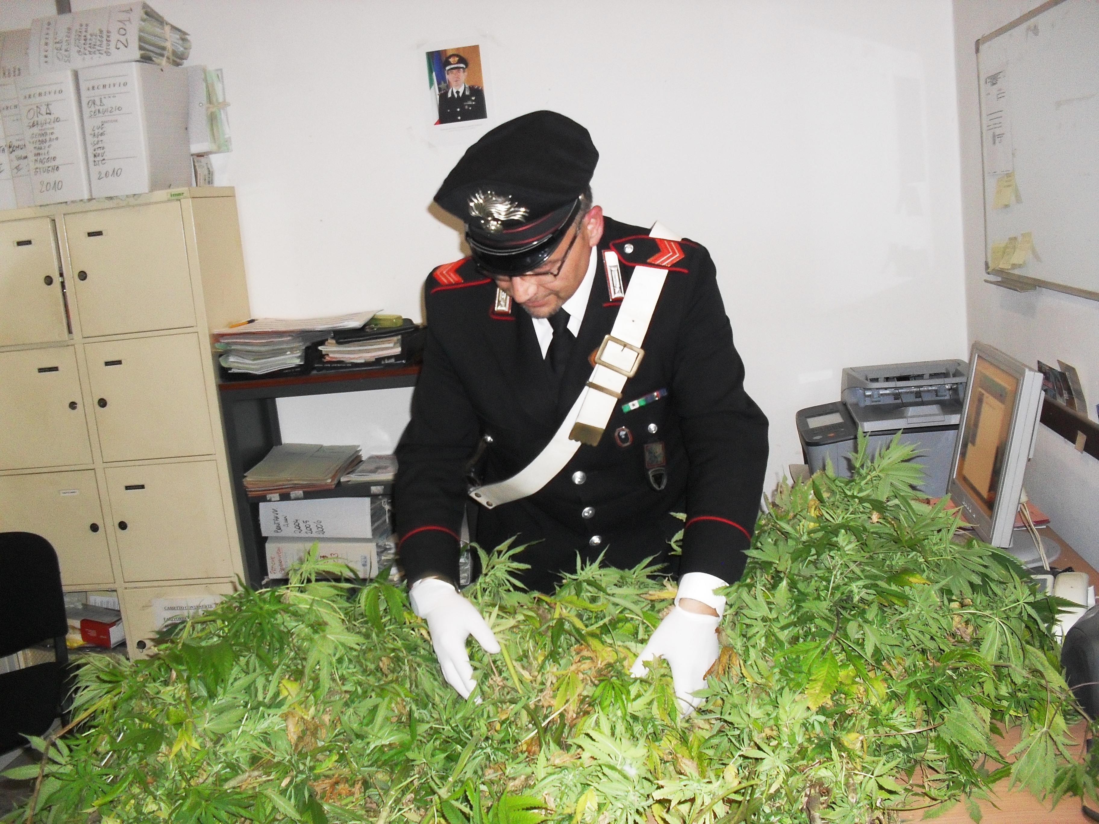 cannabis-carabinieri-ok-764645654