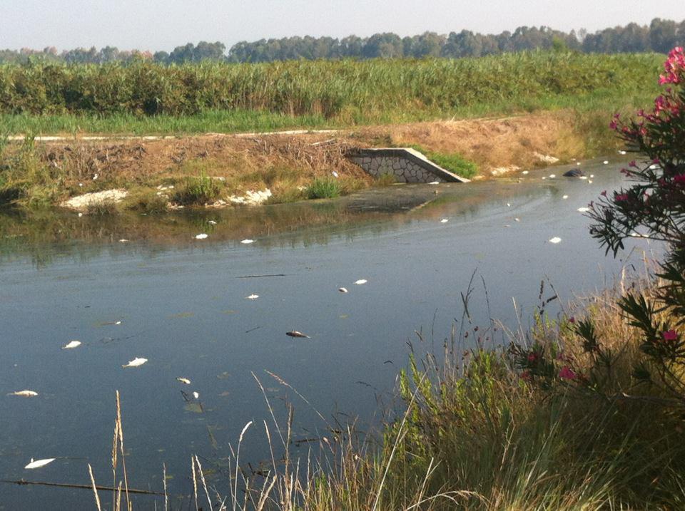 Moria di pesci nel canale-via del lido