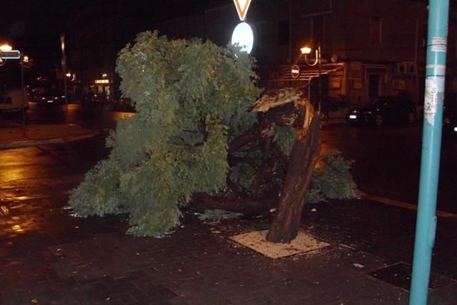 maltempo-albero-spezzato-latina-48776522