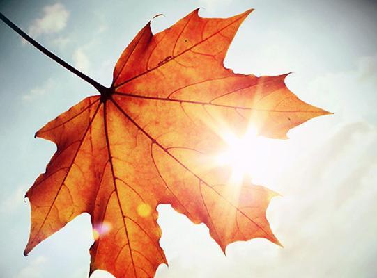 sole-autunno-latina-23271221