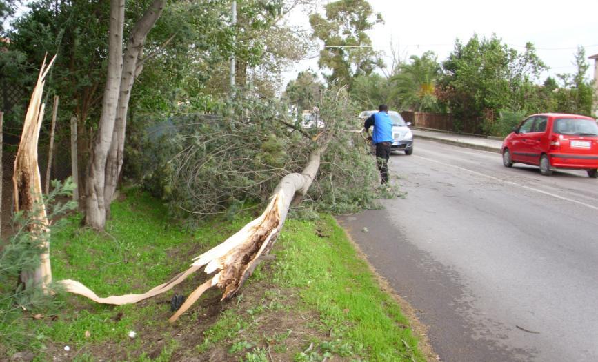 maltempo-albero-caduto-latina24ore-4687622