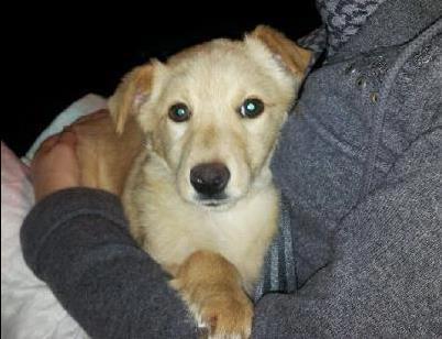 vaniglia-cane-latina24ore-576822499