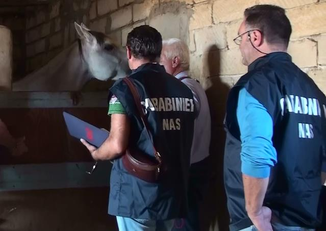 nas-carabinieri-cavalli-latina24ore-77661