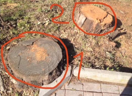 alberi-abbattuti-via-del-lido-latina