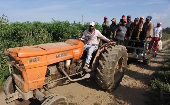 indiani-lavoro-campi-agricoltura