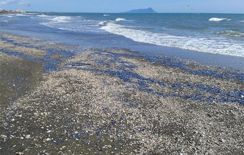 sabaudia-spiaggia-meduse