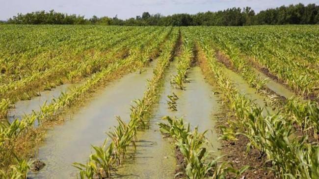 agricoltura-maltempo-campo-latina