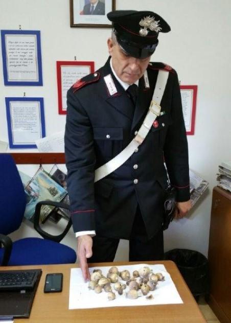 carabinieri-sequestro-oppio-latina