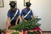SS. Cosma e Damiano, 50enne arrestato per spaccio di droga