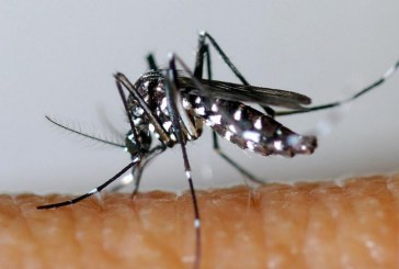 Chikungunya, Regione chiede ai Comuni di estendere la disinfestazione