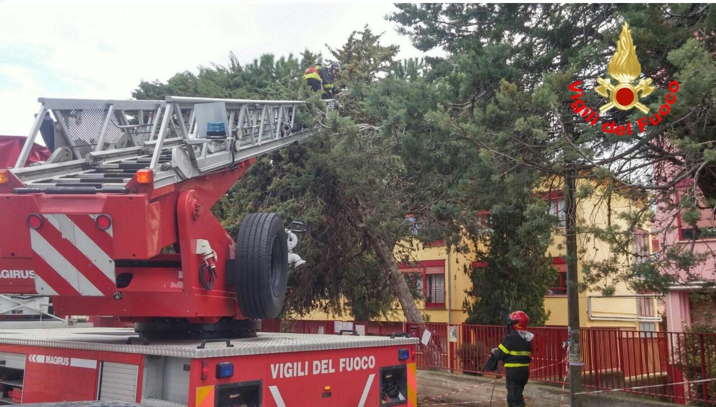 albero-caduto-latina-maltempo-2016-scuola