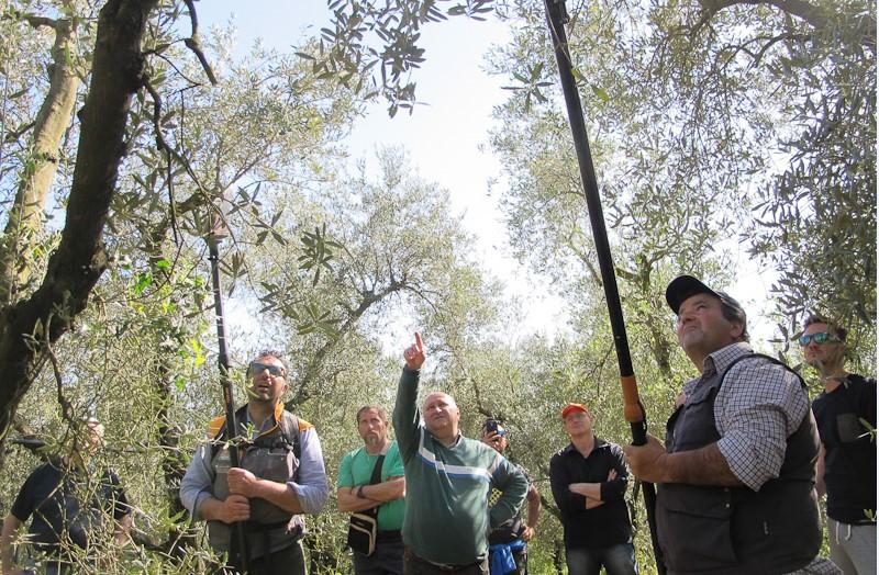 potatura-alberi