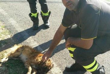 Cane rimane intrappolato in una cisterna d'acqua: intervengono i vigili del fuoco