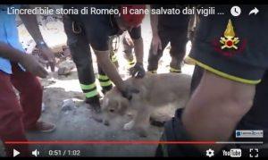 FOTO L'incredibile storia di Romeo, il cane salvato dai vigili del fuoco 10 giorni dopo il terremoto