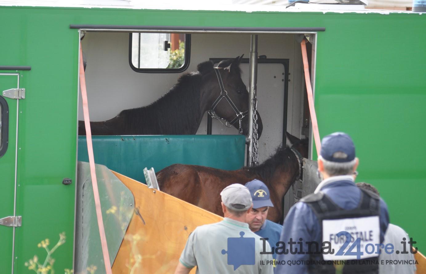 sgombero-terreni-cavalli-disilvio-latina-15