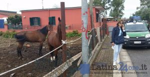 VIDEO FOTO Blitz sui terreni occupati dai cavalli dei Di Silvio, il Comune si riprende le aree