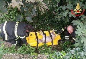 FOTO Cane investito finisce nel fosso ma viene salvato dai vigili del fuoco