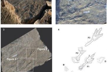 L'orma di dinosauro trovata a Rio Martino sarà custodita al Procoio