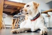 Boom dei negozi per animali online