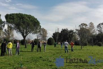 Sempreverde: a Latina 100 alberi in cerca di adozione, bastano 5 litri di acqua ogni 2 settimane