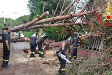 VIDEO FOTO Maltempo a Terracina, cadono alberi sulle case