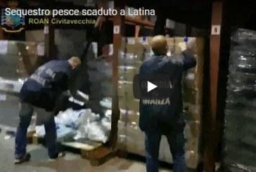 VIDEO Pesce Scaduto, maxi sequestro a Latina: 550 tonnellate pronte alla vendita