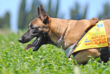 Epifania, Carabinieri Forestali portano doni e cani antiveleno ai bambini ricoverati in ospedale