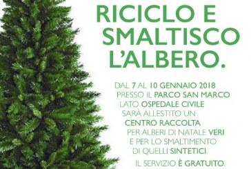 A Latina l'inedita raccolta differenziata degli alberi di Natale