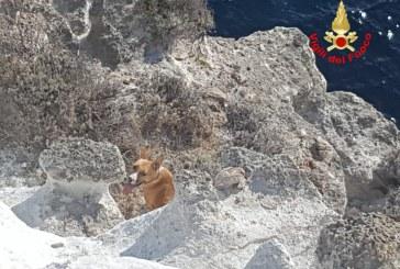 FOTO Cane precipita sul costone a Ponza, salvato dai vigili del fuoco