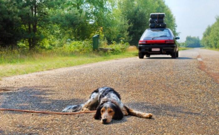 Il numero per segnalare cani abbandonati non è attivo da anni