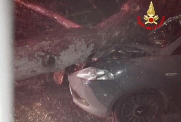 Maltempo, tragedia sfiorata a Latina: albero cade su un'auto in movimento