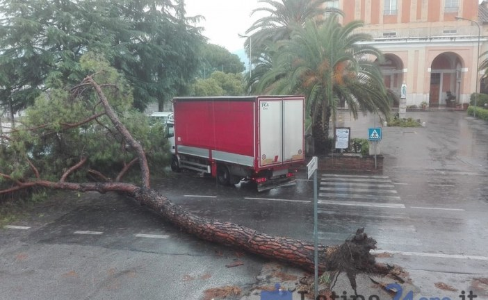 FOTO Maltempo, crolla un pino a Tor Tre Ponti