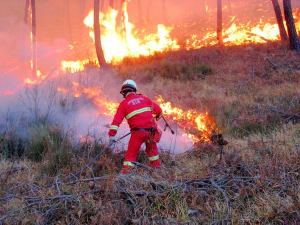 incendio_vigili_fuoco_bosco_65rfd