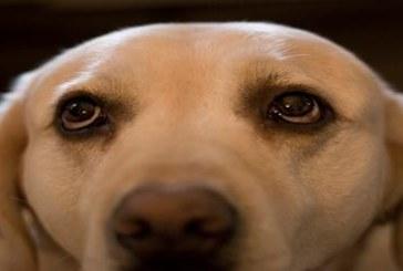 A Latina un concorso di bellezza per cani